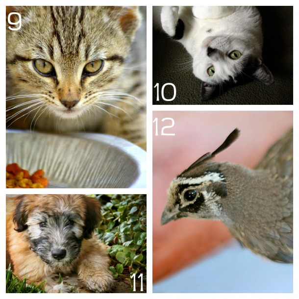 how to photograph pets