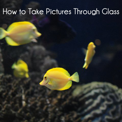 how to take pictures through glass