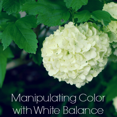Manipulating Color with White Balance