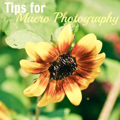 tips for macro photography