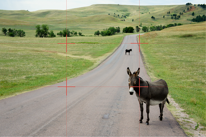 Wild-Burro-Rule-of-Thirds-01